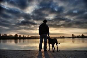 Guarda Alternada de Cão de Estimação